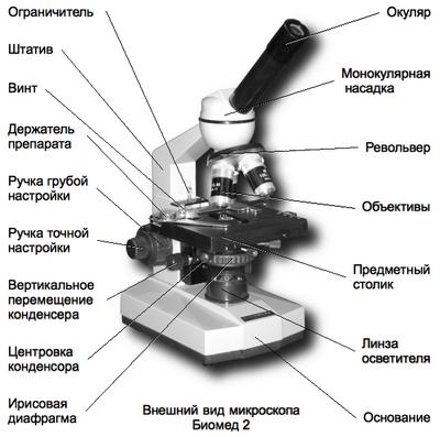 Микробы под микроскопом для детей: картинки и видео 980